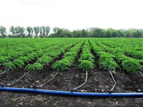 drop irrigation technology  develop kazakh farms