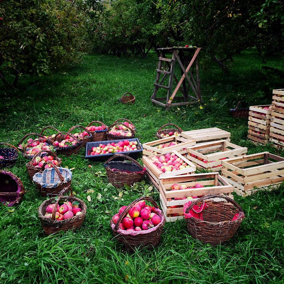 Young Kazakh Entrepreneurs Seek to Save Aport Apple