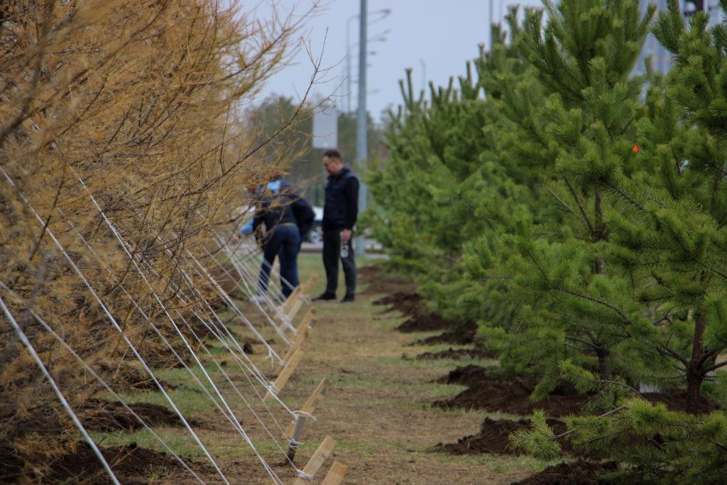 IMG 1666 1024x683 - Один миллион деревьев будет посажено в Казахстане в рамках общенациональной кампании