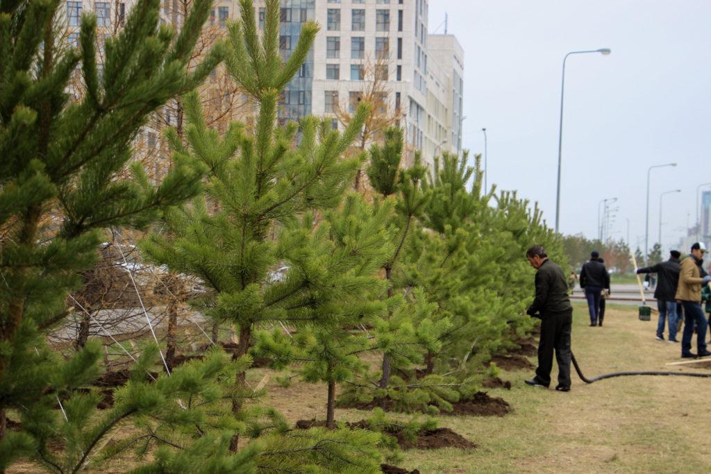 IMG 1669 1024x683 - Один миллион деревьев будет посажено в Казахстане в рамках общенациональной кампании