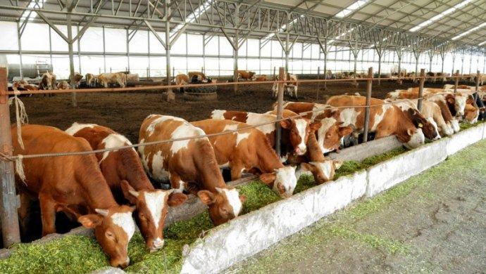 KP story Kazakhstan plans to develop its brand in global meat market 1 - Казахстан планирует развивать свой бренд на мировом рынке мяса